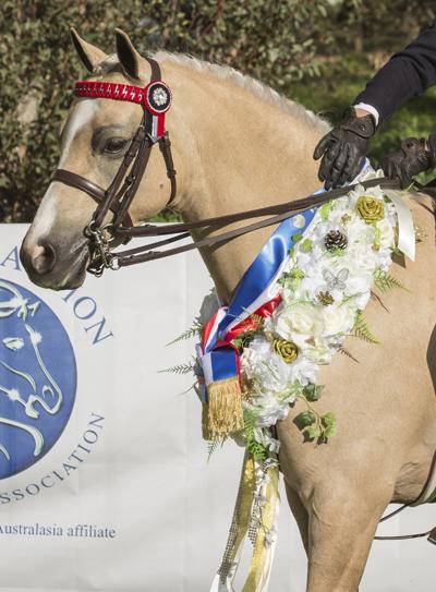 Show Horse Garlands