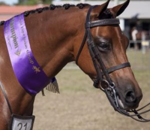 Hunter Browbands
